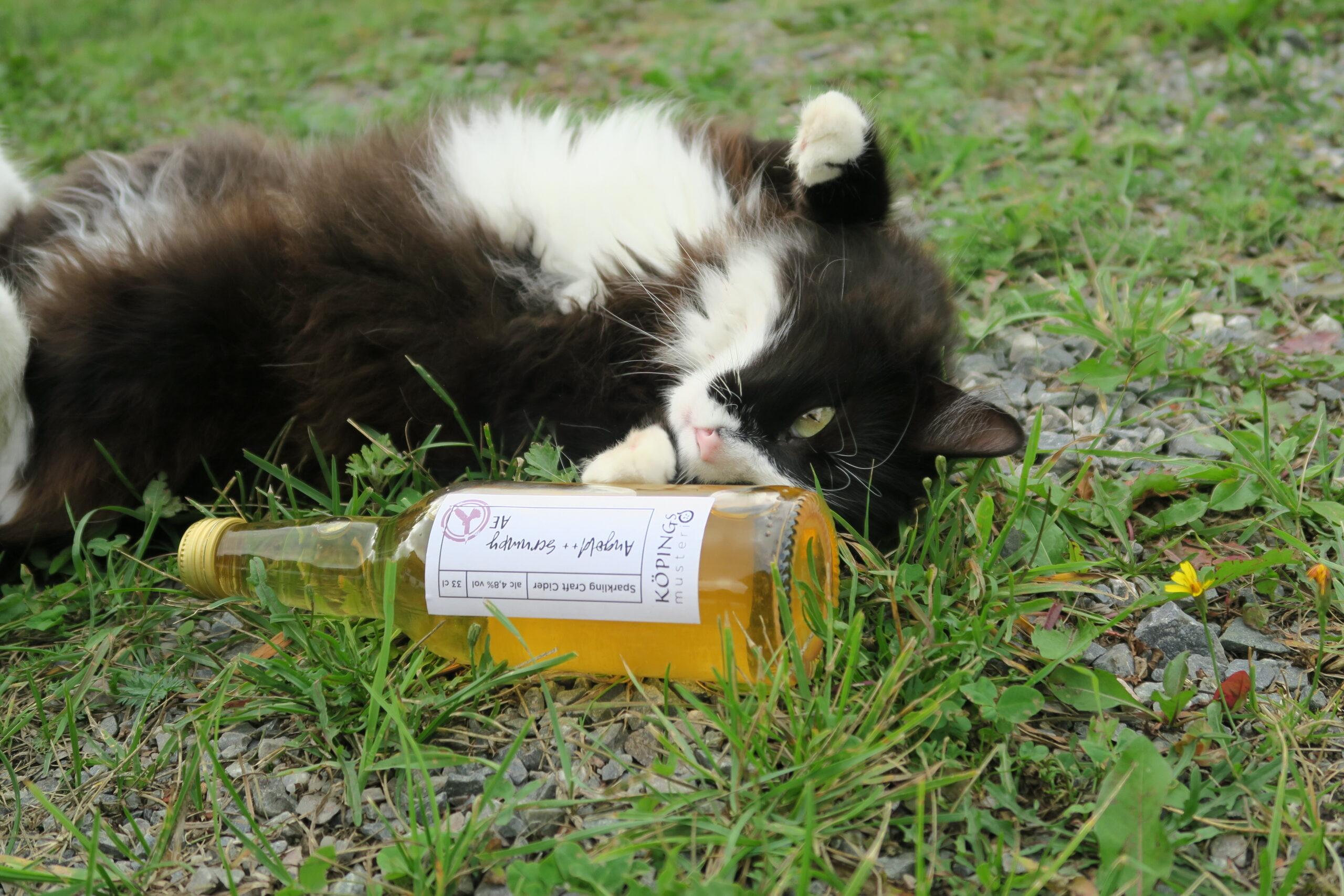 Katt och cider